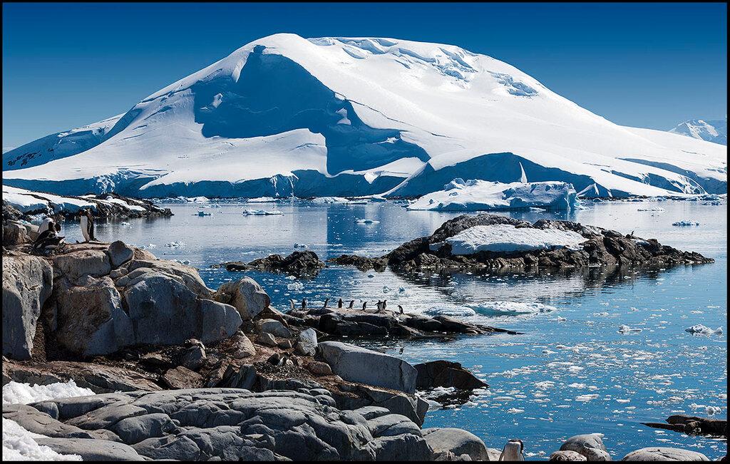 Антарктический полуостров. Среди пингвинов.jpg