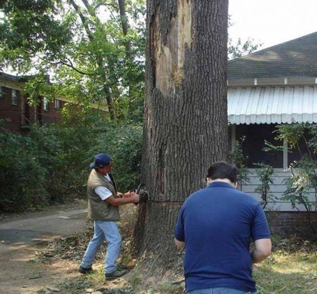 Как не нужно валить дерево