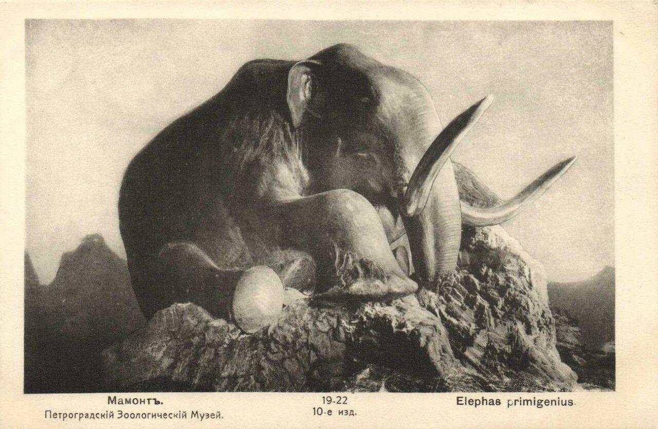 Петроградский Зоологический музей