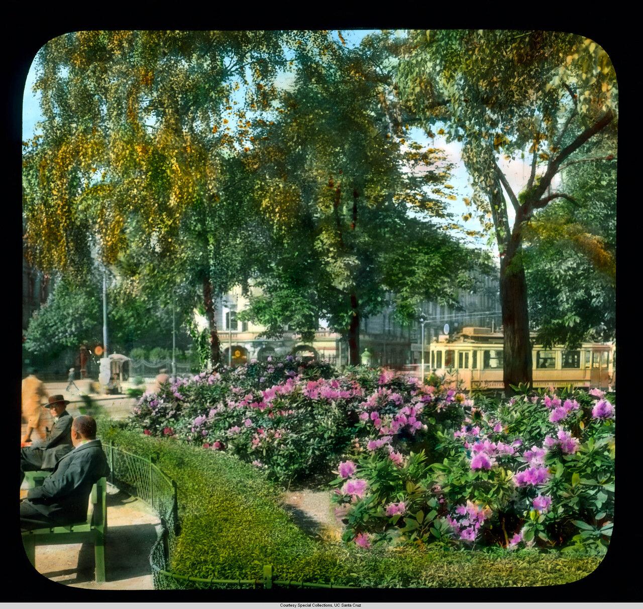 Франкфурт-на-Майне. Азалии в парке