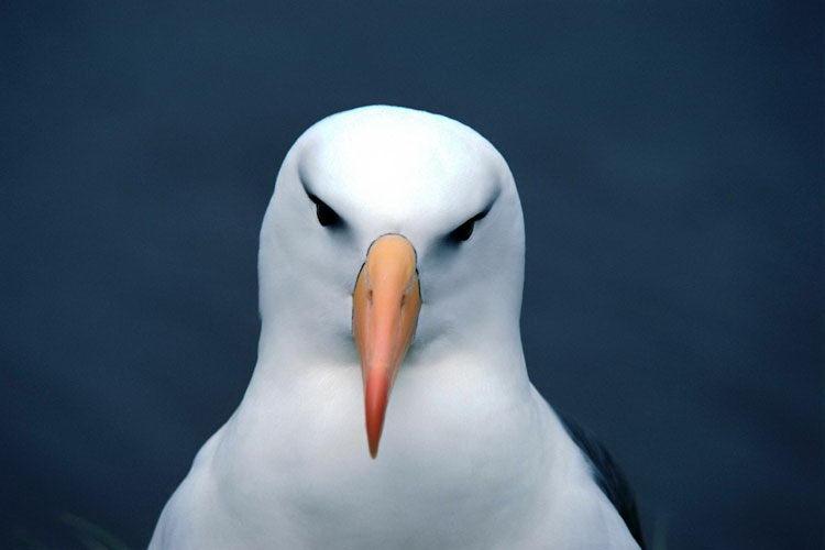 Вдумлива птах
