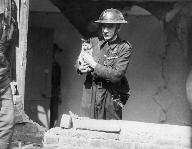 Apart from his more urgent jobs, rescuing pets is one of his many duties which the ARP Warden has imposed on himself. This cat was saved from a bombed house in East London this morning, 21 September 1940.