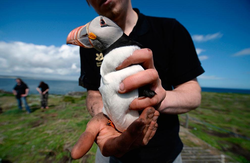 Переписчики местного населения покрывают тюленей специальным красящим веществом. (Фото Reuters | Nig