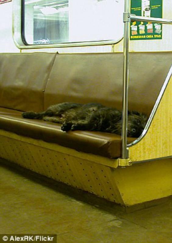 Метро привлекает бездомных животных теплом и возможностью найти еду, так как многие люди подкармлива