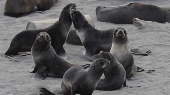 НаСахалине туристы засняли издевающихся над тюленями браконьеров