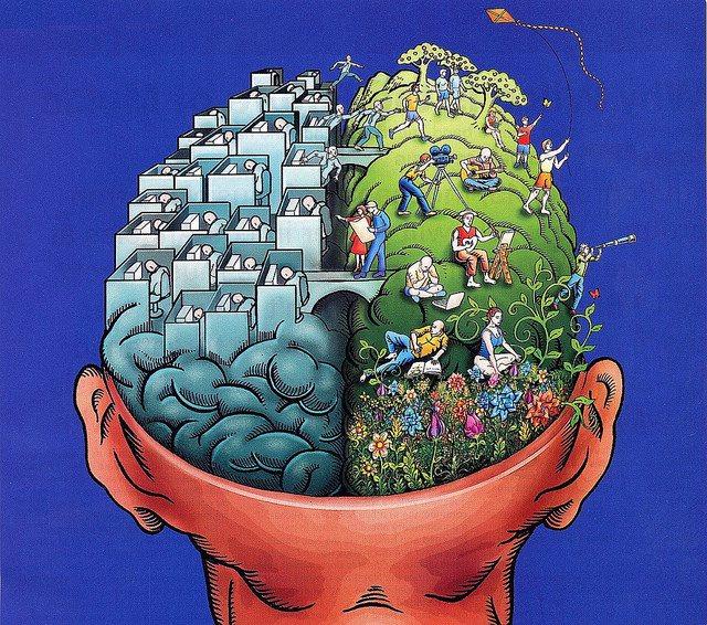 полушария головного мозга взаимосвязаны