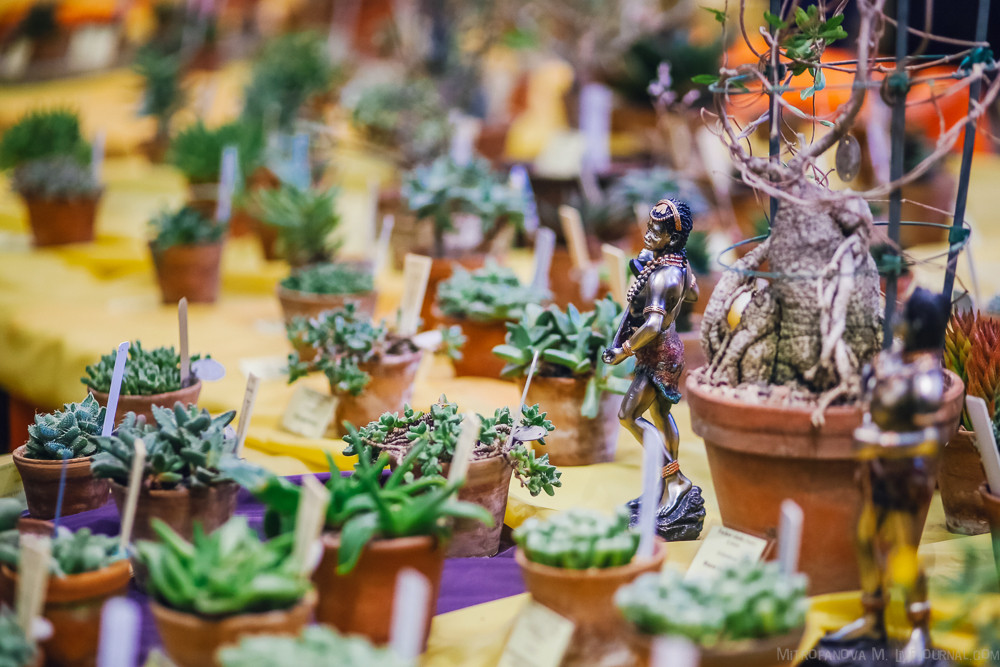 """Ботанический сад: выставка суккулентов """"Сокровища южно-африканских пустынь"""""""