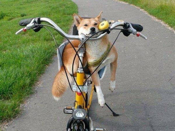 утро на велосипеде веселые картинки кружево