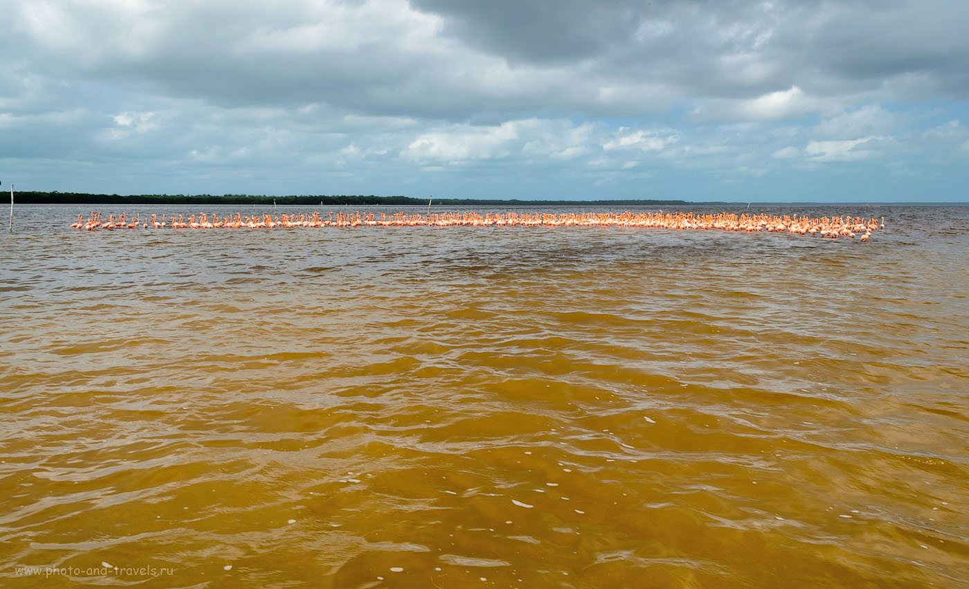 Фотография 4. Стадо розовых фламинго в национальном парке Селестун (la Reserva de la Biosfera Ría Celestún). Отзывы туристов об экскурсиях во время отдыха в Мексике самостоятельно. 1/160, 11, 18mm, ISO 100