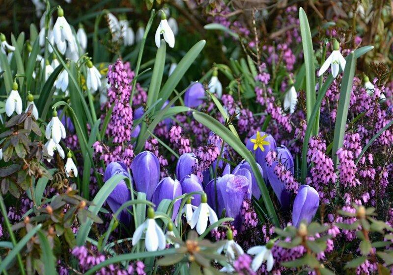 Голубая-розовая весна