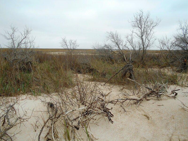 Песок, лесок, апрель... DSCN1711.JPG