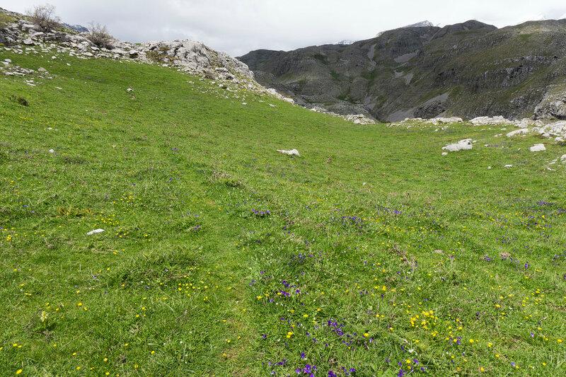 тропа по зеленым лугам в горах Греции