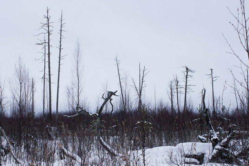 в Кауштинском болоте зимой