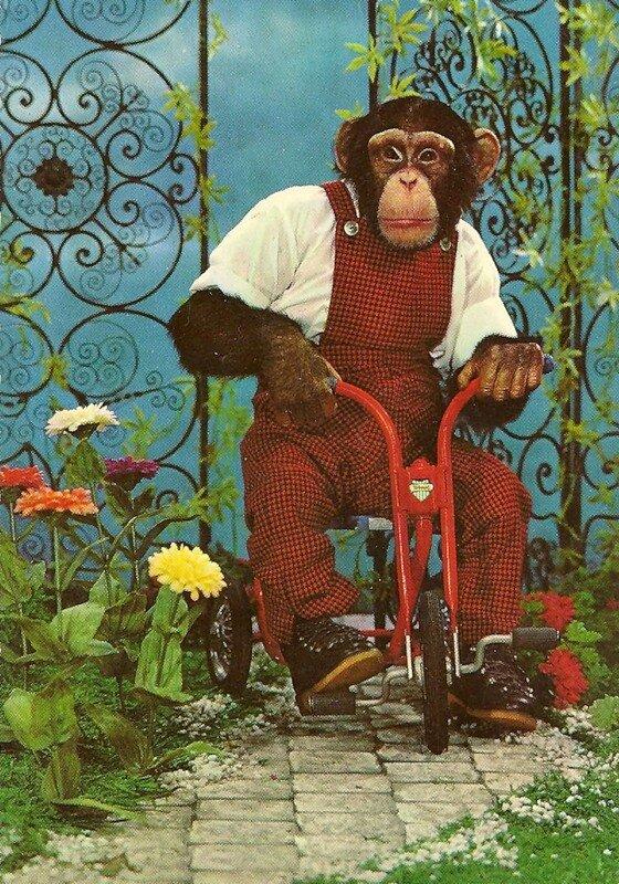 Мая, открытка с обезьяной фото
