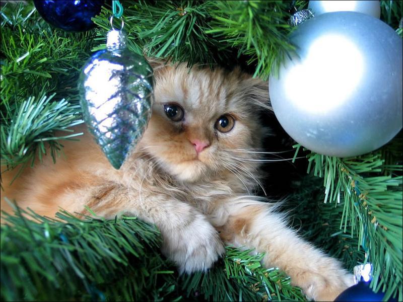 Коты на ёлке - фото 37