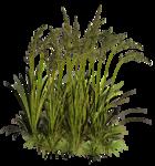 Lug_Grass_Flower (70).png