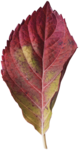 RR_HeartWhispers_Element (70).png