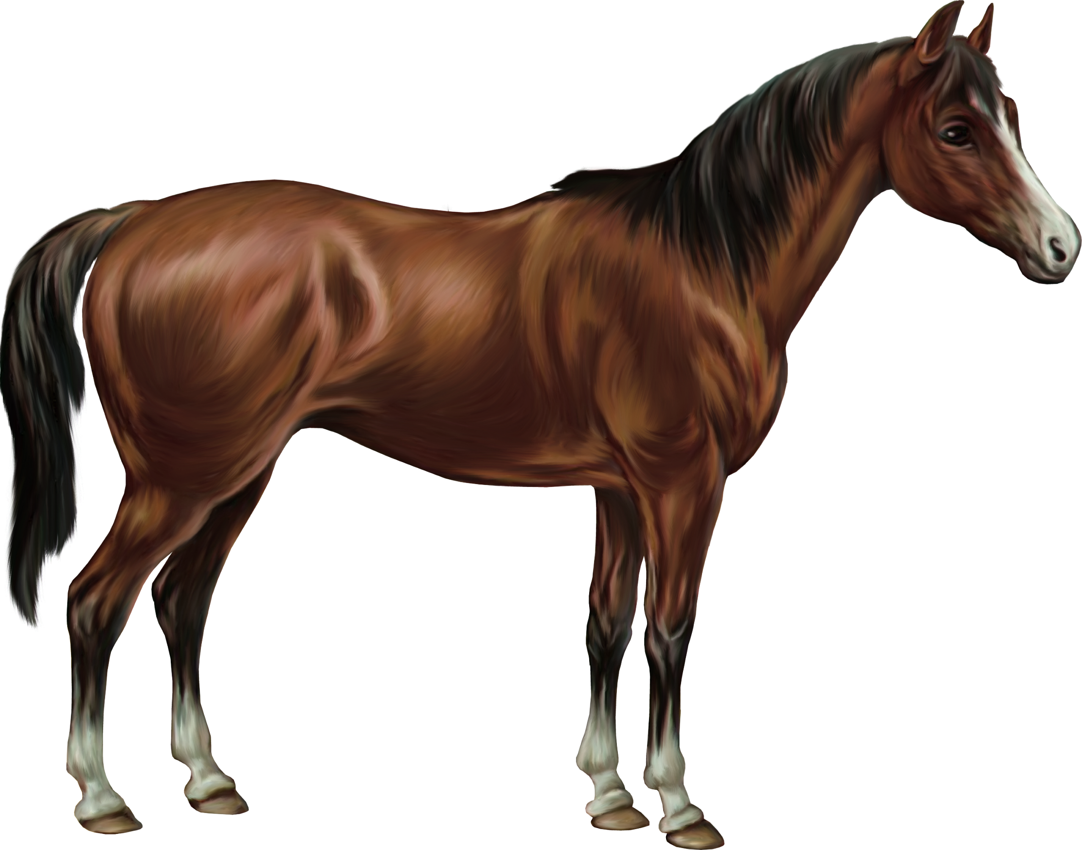 Tubes animaux 2 - Clipart cheval ...