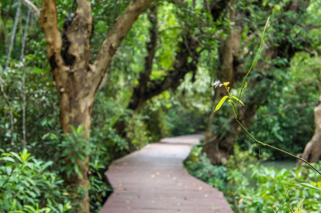 Мангры и мангровый лес в Таиланде