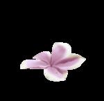 pinkflower-(BrydkaM).png