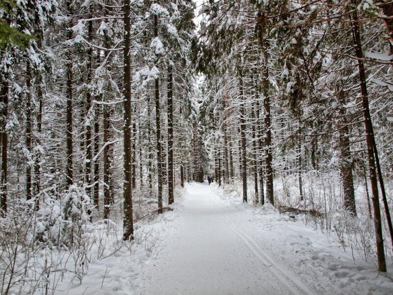 лыжня в Порошино