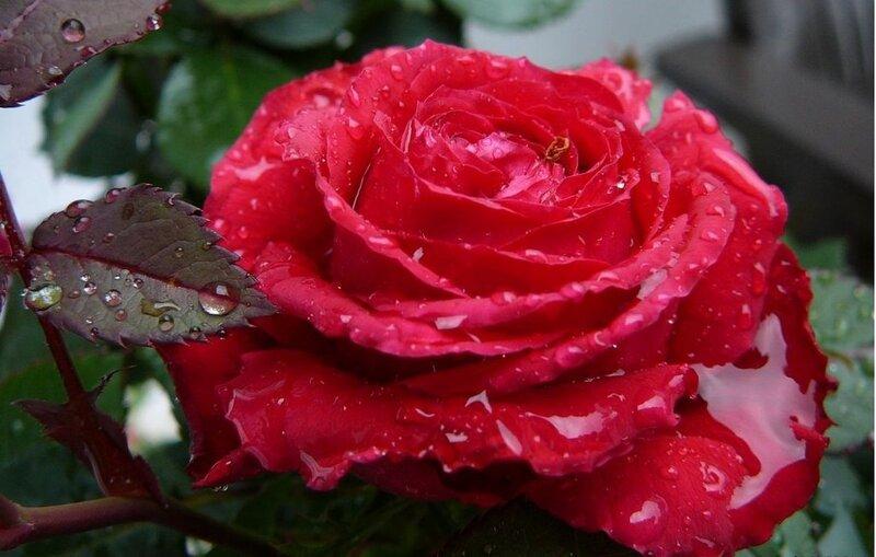 Фото цветы красивые живые