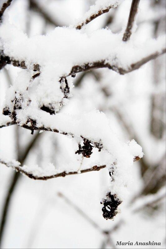 Веточка под снегом