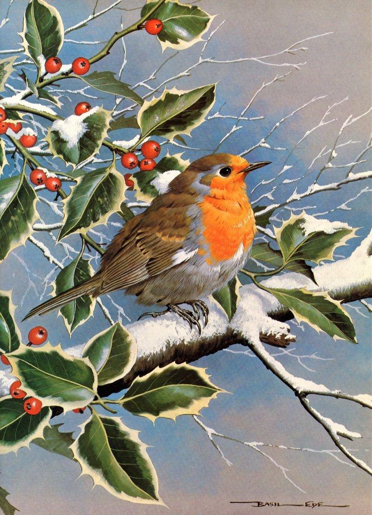 Реалистичные птицы английского художника Basil Ede