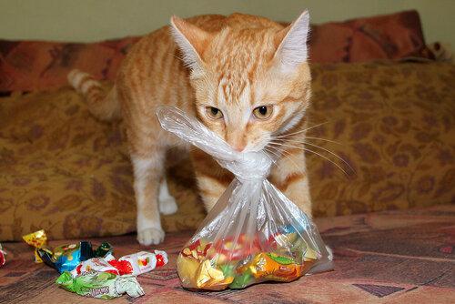 кот подарки раздает!