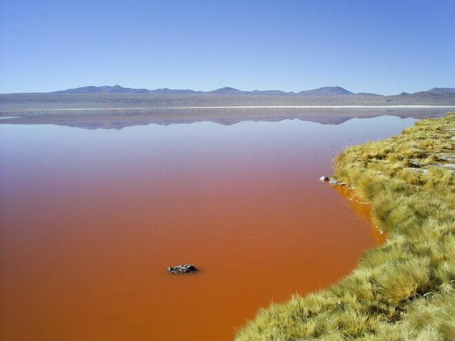 Озеро Лагуна Колорадо. Боливия