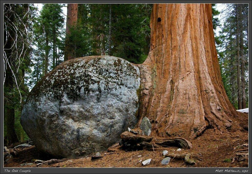Неразлучная парочка или Снесло как то дерево яичко...