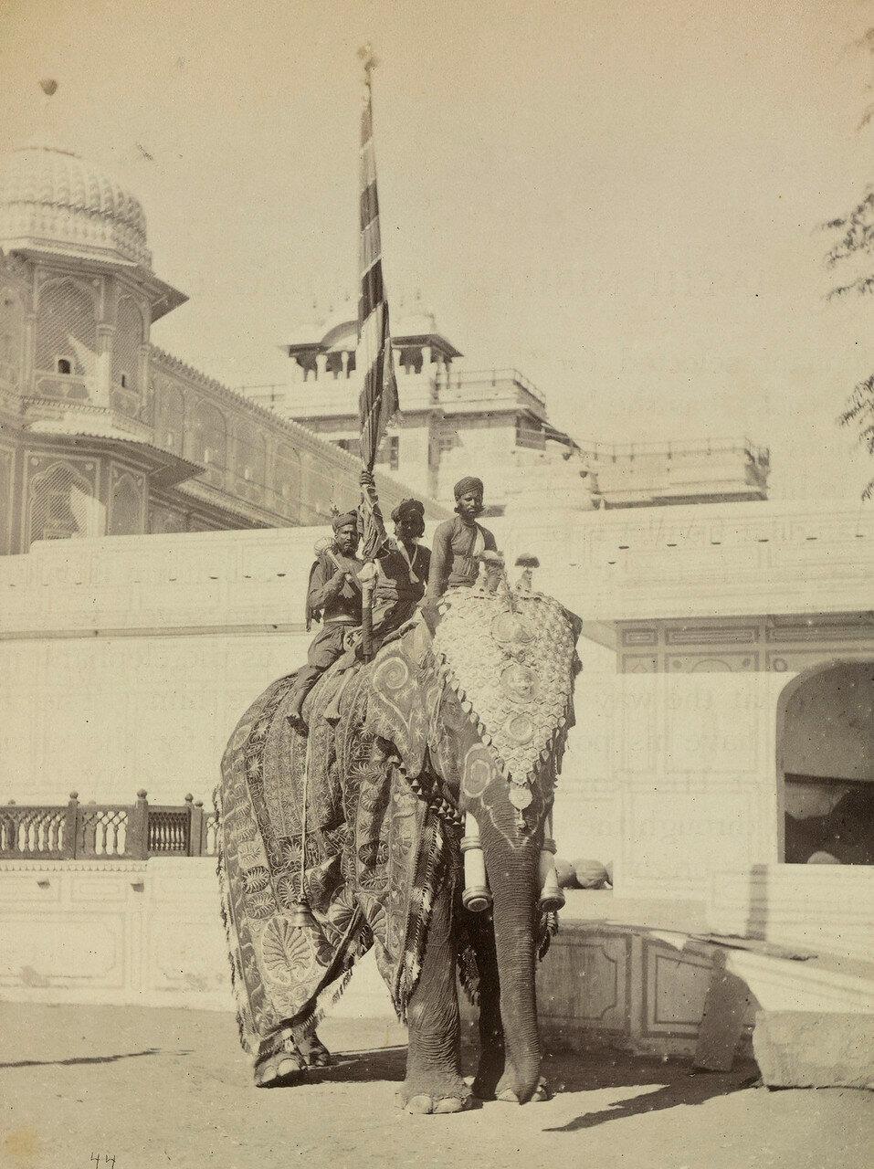 90. Знаменосец на слоне в Джайпуре