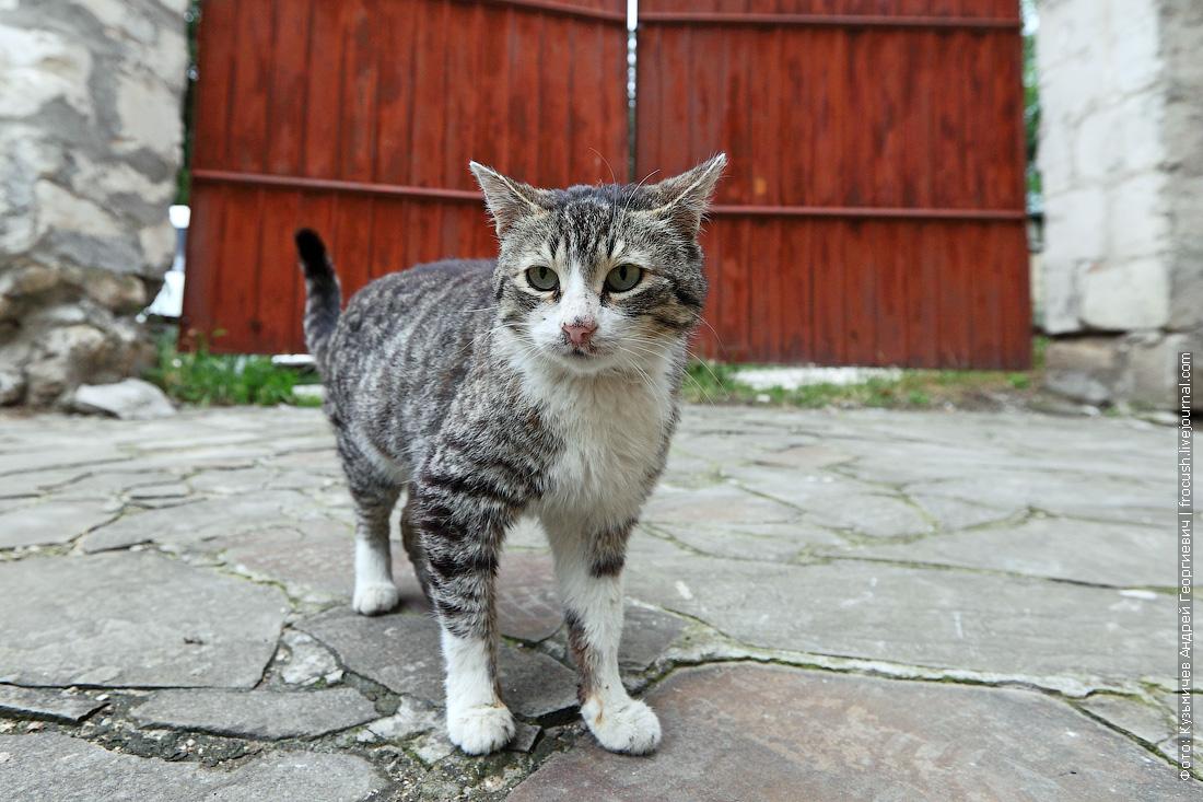 Бахчисарай Ханский дворец как правильно помыть кошку