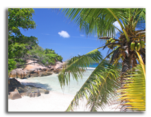 Сейшелы. Palm tree on empty beach, Grand Soer, Seychelles. Фото romancenek - Depositphotos