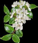 Carena Sweet Love of Spring Cluster 7.png