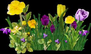 Sweet love of Spring