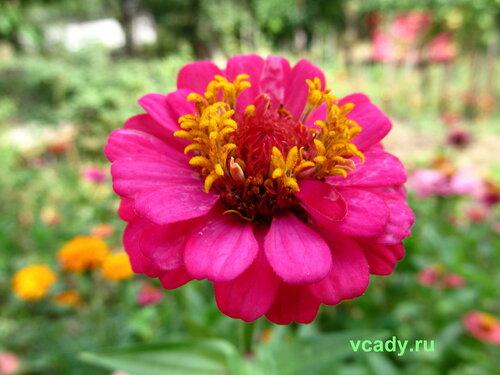 http://img-fotki.yandex.ru/get/5642/148838934.5/0_c797d_3796bbaa_L.jpg.jpg