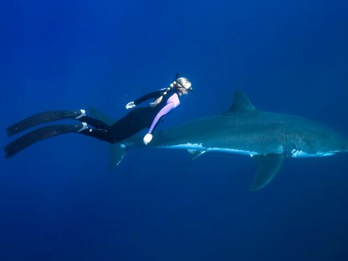 Умница, красавица, с акулами общается