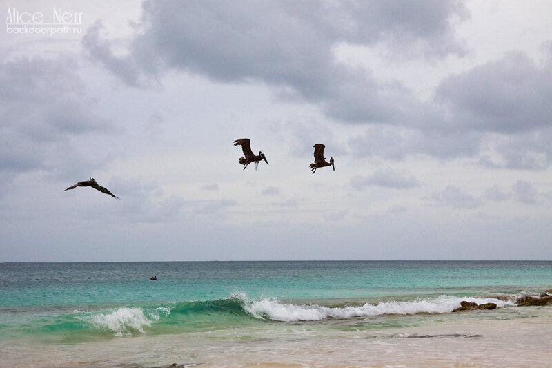 пеликаны на рыбалке