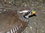 Защитные шоры  от расклёва разных размеров и вида для птиц