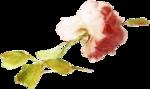 ldavi-heartwindow-rose8.png