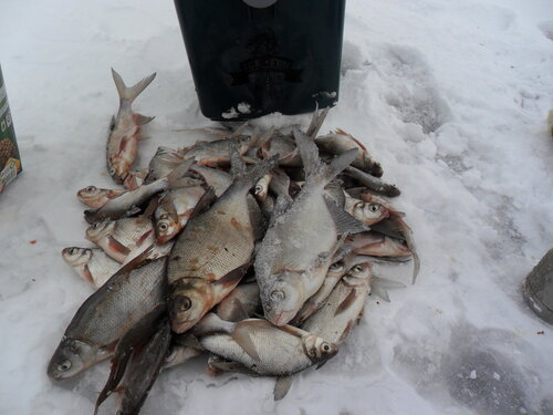 Рыбалка на пронском водохранилище тульской области