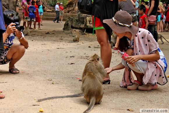сфотографироваться с обезьянкой