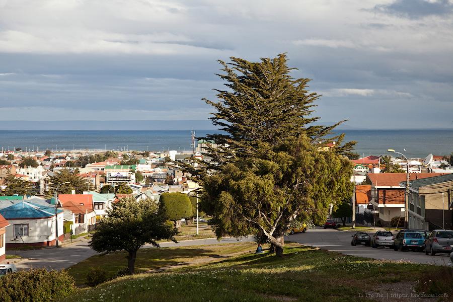 2. Пунта Аренас и фауна Магелланова пролива