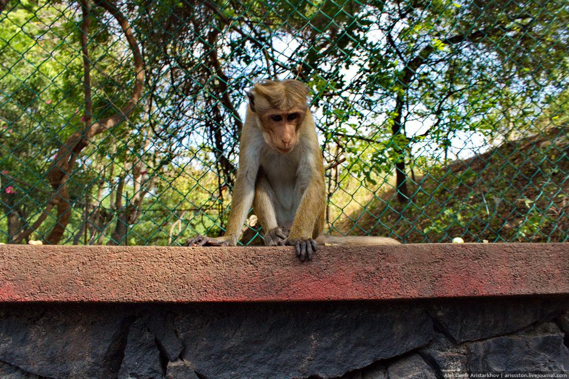 Шри-Ланка_Пещерный храм_03