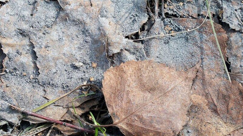Серый порошок на листве