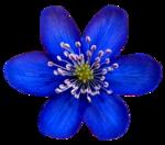Du bleu pour MВlanie (32).png