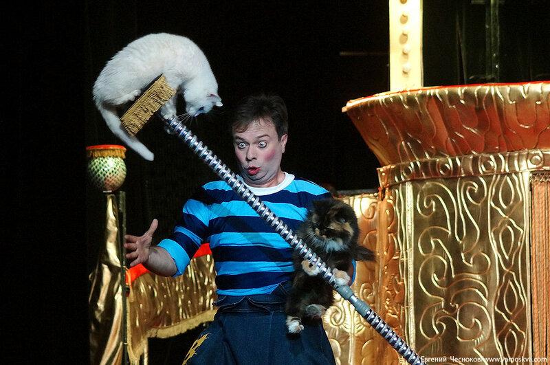 Осень. Театр кошек. ДИНАСТИЯ. 15.10.15.09..jpg