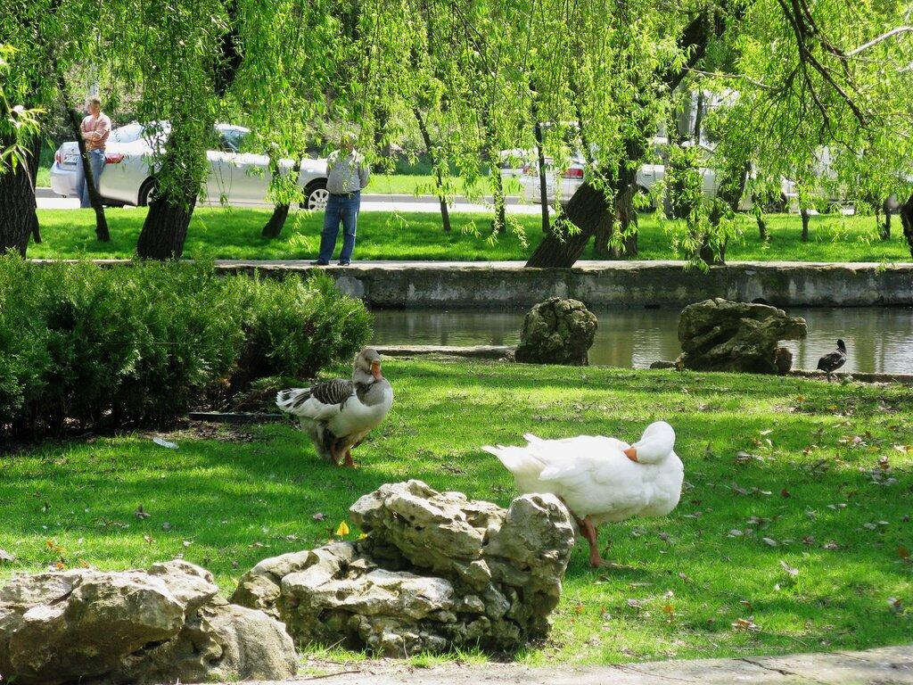 Прогулки по Краснодару: ГОРОДСКОЙ САД