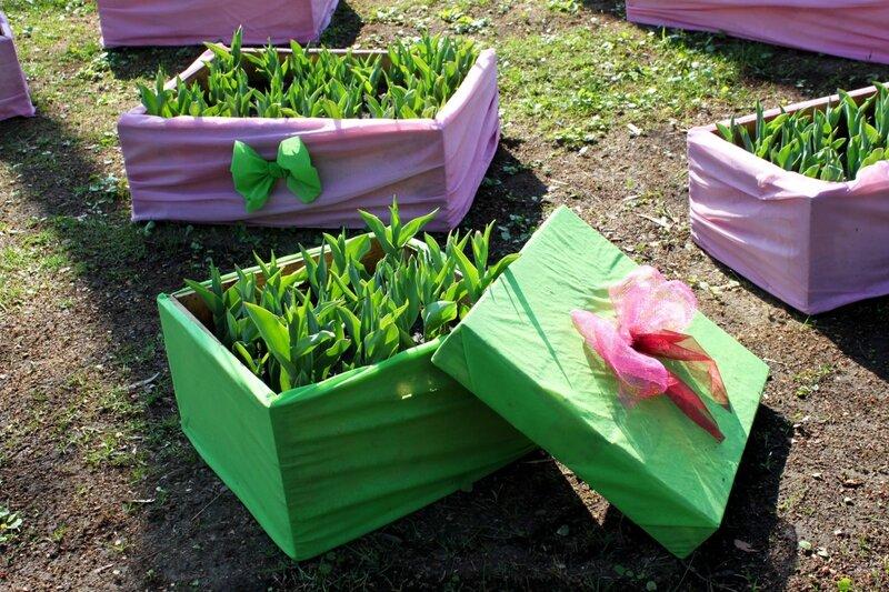 Топиари из тюльпанов
